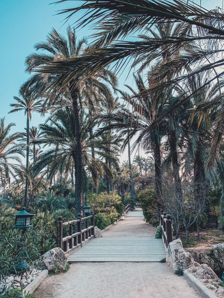 You can visit El Palmeral for free - perfect for being in Alicante on a budget!